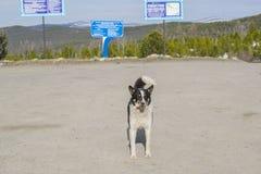 Dog tourist Stock Photography