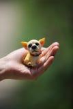 Dog toy Royalty Free Stock Image