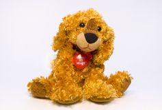 Dog toy. New years signs of the zodiac golden dog toy Stock Images
