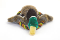 Dog Toy Stock Photos