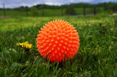 Dog toy on green lawn Stock Photos