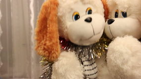 Dog Toys stock video
