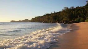 Dog trädet på den sandiga stranden på Seychellerna stock video