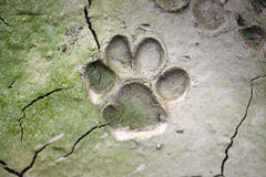 dog  track on mud - Royalty Free Stock Photo