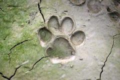 dog  track on mud - Royalty Free Stock Photo