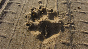 A dog track on the sand Stock Photo