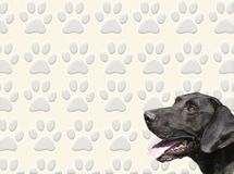Dog and tracks. A dog head against a dog tracks background stock illustration