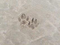 Dog tracks on the beach sand royalty free stock photo