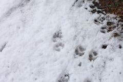 Dog Tracks Royalty Free Stock Image