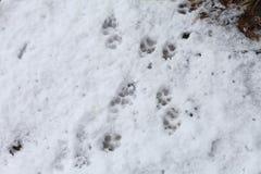 Dog Tracks Stock Images