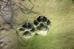 Dog  tracks in cracked mud Stock Photo