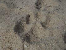 Dog tracks stock photo