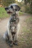 Dog on the Trai Royalty Free Stock Image