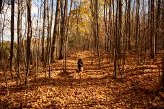 Dog on trail in autumn Stock Photo