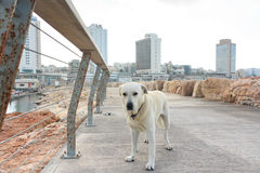A dog on the trail Tel Aviv marina, Israel Royalty Free Stock Photo
