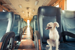 Dog on train, Vintage style Royalty Free Stock Photos
