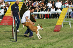 Dog trainer and dog agility Stock Image