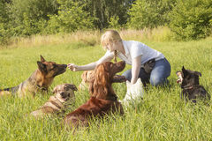 Dog trainer feeding dog Royalty Free Stock Photography