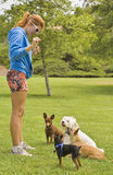 Dog Trainer with many small dogs. Handing out treats stock photography