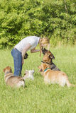 Dog trainer obedience Stock Images