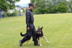 Dog trainer practices with shepherd dog stock image