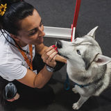 Dog and trainer at Quattrozampeinfiera in Milan, Italy Royalty Free Stock Photo