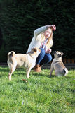Dog trainer training pug dogs Royalty Free Stock Images