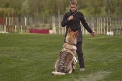 Dog trainer #2 stock photos