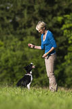 Dog training. Young woman playing with border collie dog outdoor Stock Images