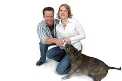 Dog Training Stock Image