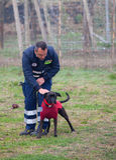Dog Training Stock Photos