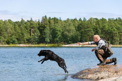 Dog training. The Labrador retriever is commanded to fetch royalty free stock images