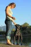 Dog Training. A young woman teaches her Pit Bull some patience at a local pond Royalty Free Stock Photography
