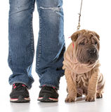 Dog training Stock Photos