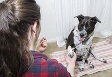 Dog Training Stock Images