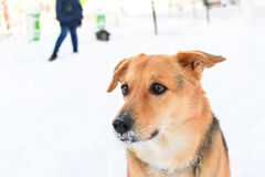 Dog training obedience Stock Photo