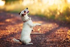 Free Dog Training Outdoors At Autumn Royalty Free Stock Photo - 121595125