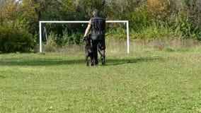 Dog training process. stock video