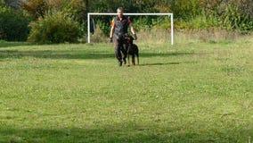 Dog training process. stock video footage