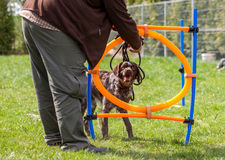 Dog training, school for dogs Stock Photos