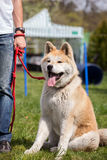 Dog training, school for dogs Royalty Free Stock Photos