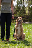Dog training, school for dogs Stock Photo