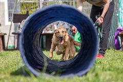 Dog training, school for dogs royalty free stock images