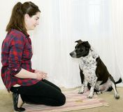 Dog Training Wait for Treat. Mixed breed dog is waiting for signal from woman to take the treat at his feet Royalty Free Stock Image
