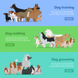 Dog Training, Walking, Grooming Banners Set Royalty Free Stock Images