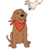 Dog training. Young labrador dog offered dog biscuit Stock Photography