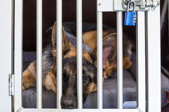 Dog transport box Stock Photo