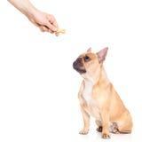 Dog trat Royalty Free Stock Photos