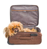 Dog in travel case. Isolated on white background Stock Images