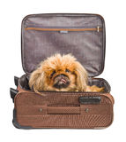 Dog in travel case Royalty Free Stock Photos